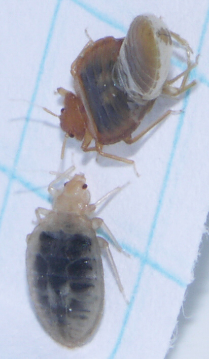Bed Bugs And Plastic Containers